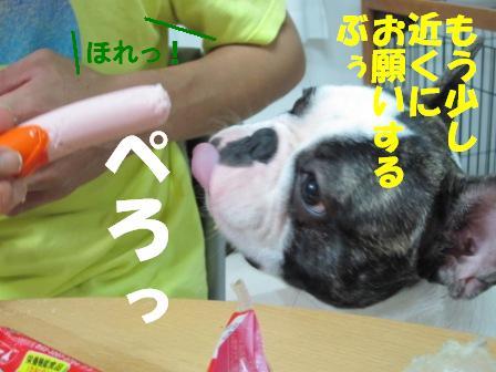 6-1_20100824105655.jpg