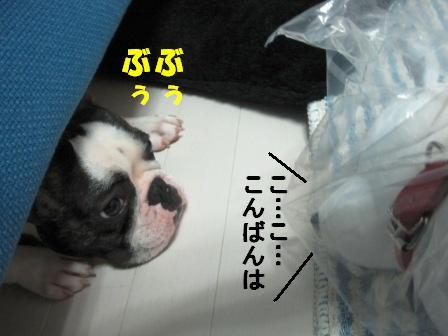 6_20100714103920.jpg