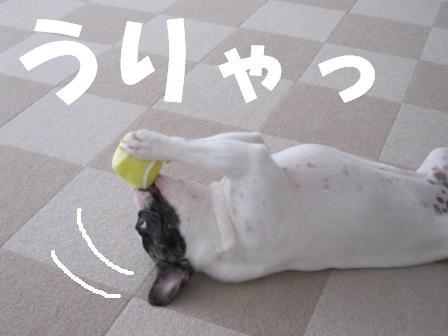 6_20100805143613.jpg