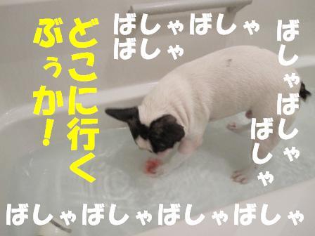 6_20100903104308.jpg