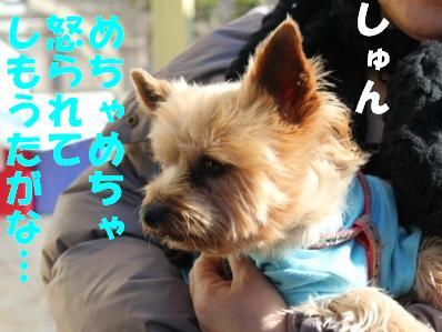 6_20110107153808.jpg