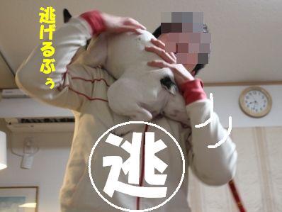 6_20110112153010.jpg