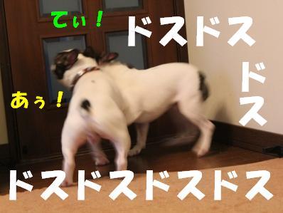 6_20110113110106.jpg
