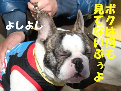 6_20110120133903.jpg