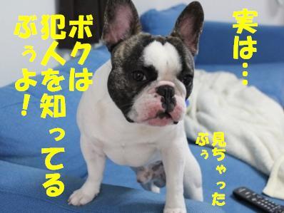 6_20110304151728.jpg