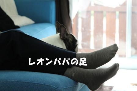 7-1_20101115160449.jpg