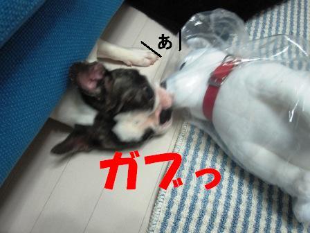 7_20100714103934.jpg