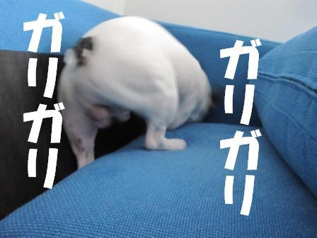 7_20100722130810.jpg