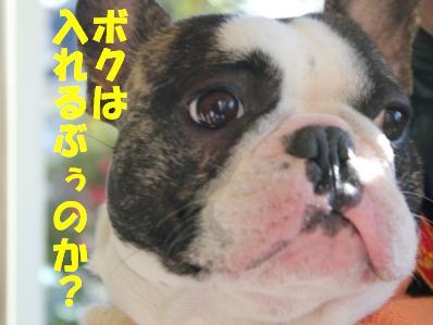 7_20110107153807.jpg