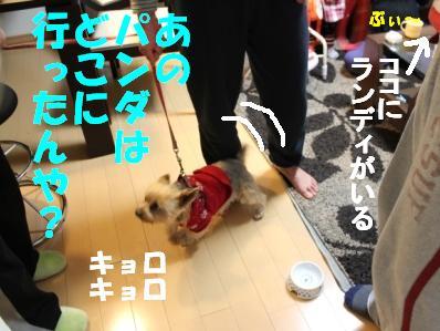 7_20110112153009.jpg