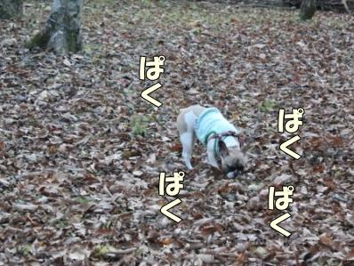 7_20111110091955.jpg