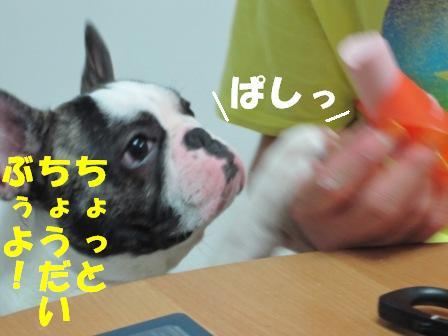 8-1_20100824105728.jpg