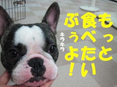 8-1_20100910105753.jpg