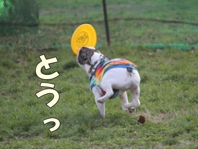 8-1_20111109095153.jpg