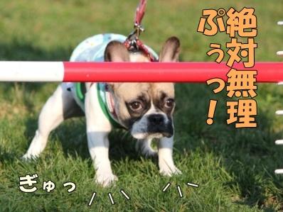 8-1_20111110114103.jpg