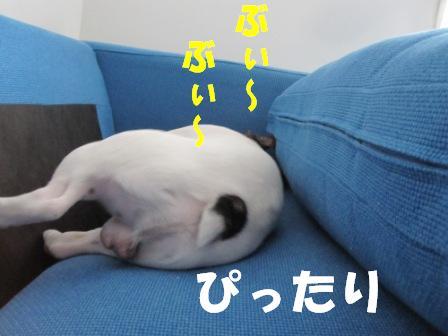 8_20100722130810.jpg