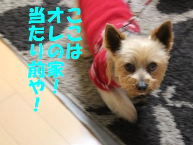 8_20110112153026.jpg