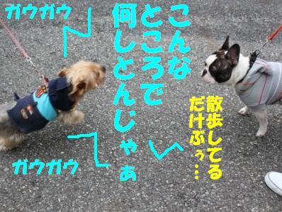 8_20110118121854.jpg