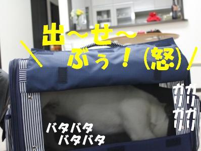 8_20110222143231.jpg