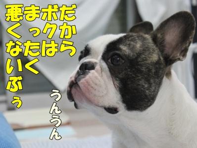 8_20110609143853.jpg