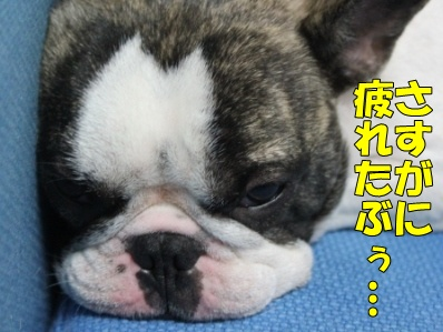 8_20111110112340.jpg