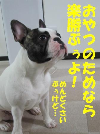 9-1_20100903095837.jpg