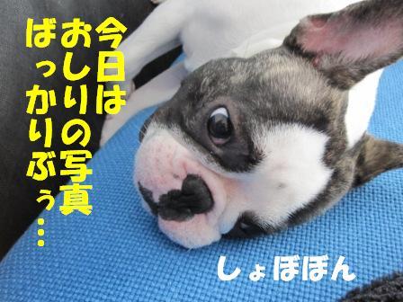 9_20100722141602.jpg