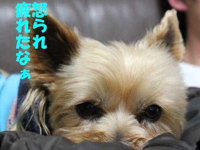 9_20110112153026.jpg