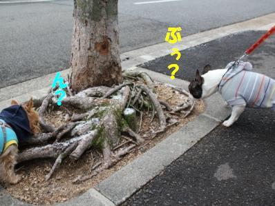 9_20110118121854.jpg