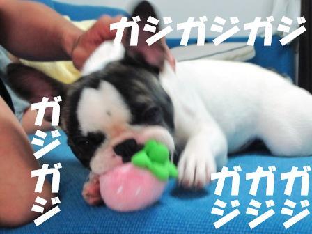 gajigaji3.jpg
