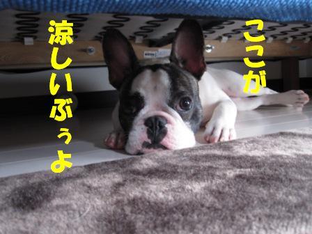 suzushii1.jpg