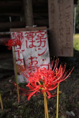 2011_09_23_KisachoTsuji_5Dm2_0001.jpg