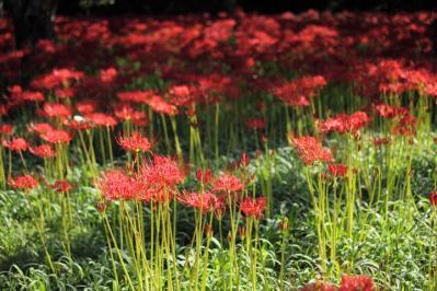 2011_09_23_KisachoTsuji_5Dm2_0003.jpg