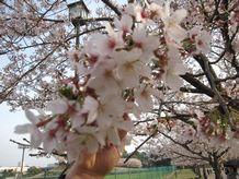 2010年 花見♪
