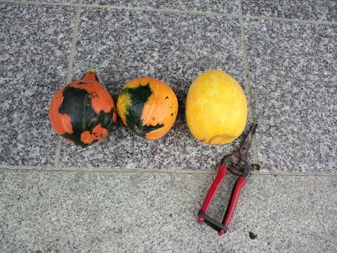 20140927_今日の収穫