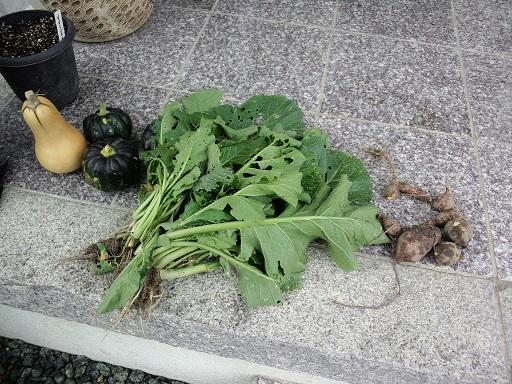 20141202_今日の収穫