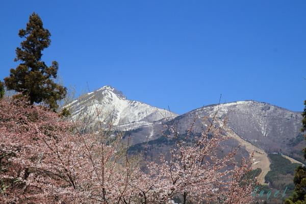 桜磐梯山(44)