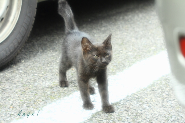 黒子猫(3984)