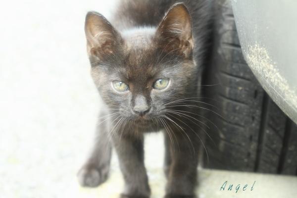 黒子猫(3986)