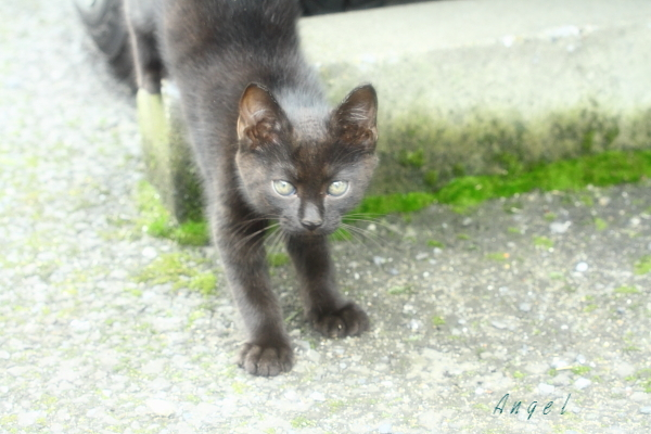 黒子猫(3993)