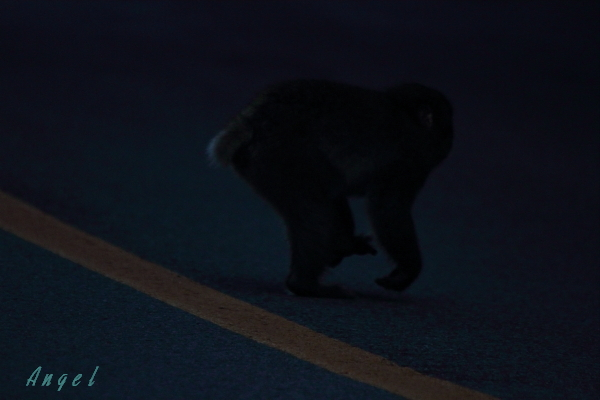 猿(6084)
