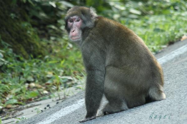 猿(6117)