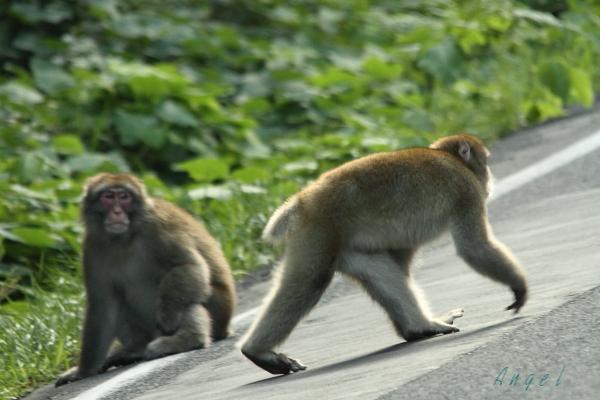 猿(6120)