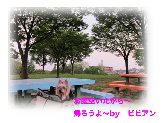 IMG_1175.jpg
