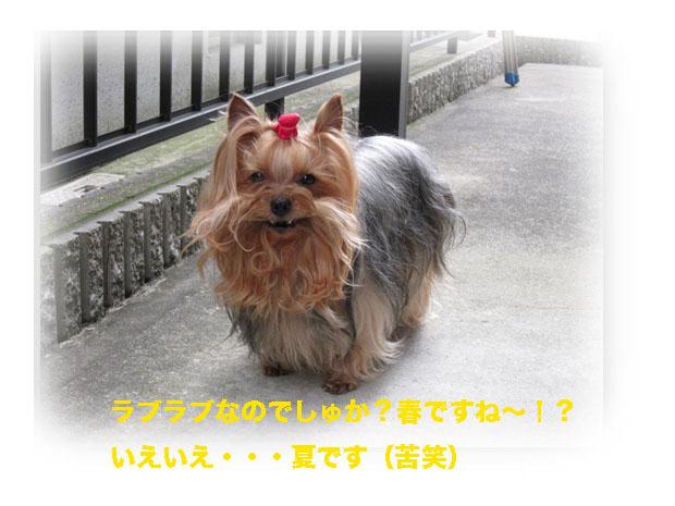 IMG_1327.jpg