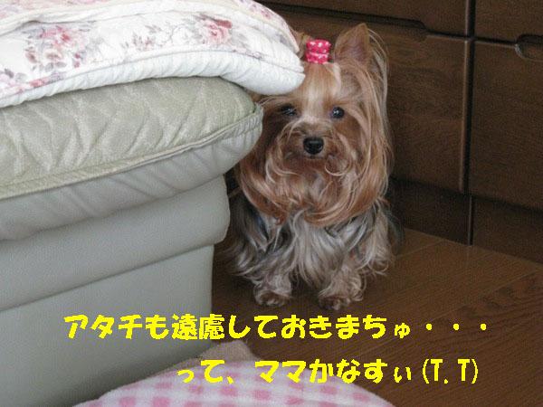IMG_2306.jpg
