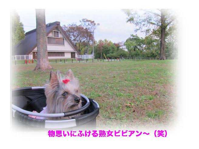 IMG_2369.jpg