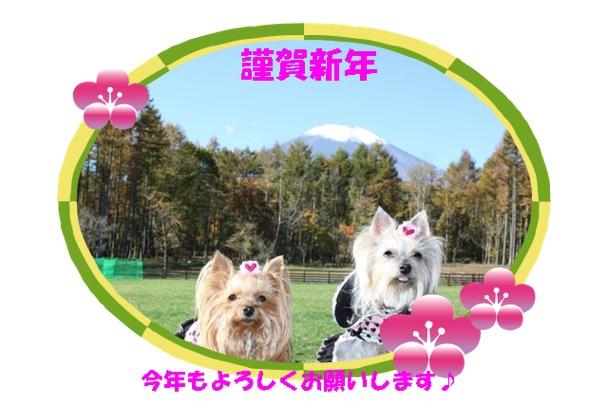 IMG_5215_1.jpg
