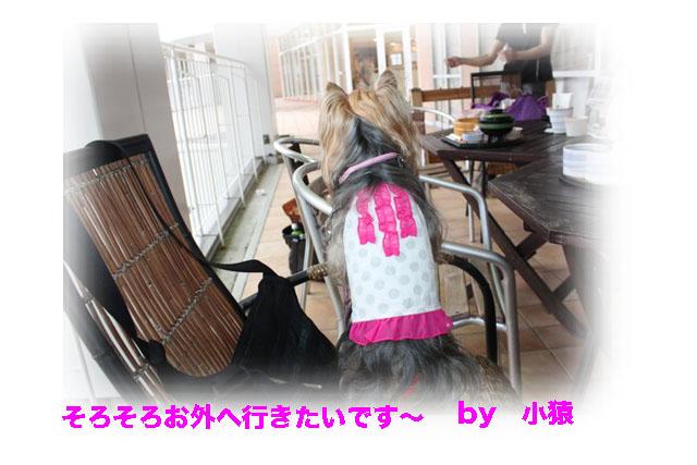 IMG_6967.jpg