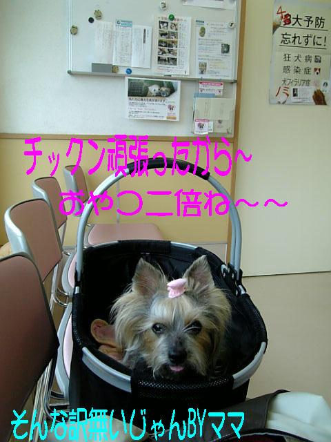 Image398.jpg